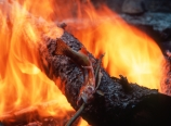 Campfire and trout