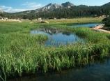 Kerrick Meadow
