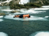 Doing pushups on floating ice