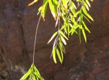 2006-12-03-095910-img_2202-1