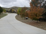 Driveway with zelkova trees in fall color