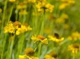 Trailside wildflowers