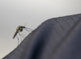 Mosquito on rainpants