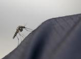 Mosquito on rainpants