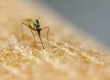 Mosquito on my dry leg