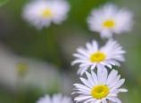 Creekside wildflower