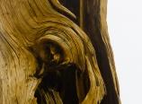Dead tree detail
