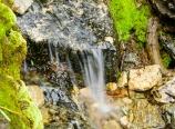 Limber Pine Springs