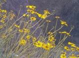 Campside wildflowers