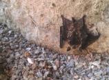Stray bat
