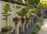 Bonsai court