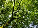 Tree at Multnomah Falls