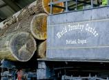 World Forestry Center
