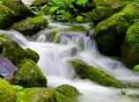 Tish Creek