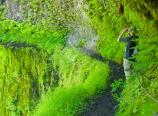 Trail around Tunnel Falls