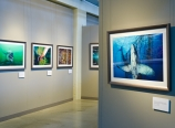 Ocean Soul exhibit by Brian Skerry