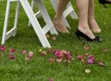 Bougainvillea petals