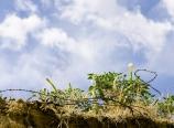 Jimson weed and sky