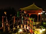 Night tour of the pond