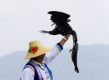 Fishing cormorants
