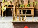 Hotel courtyard plants