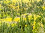 Wild Basin fall color