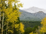 Aspens and Mt. Meeker