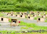 Gold Rush Summer Dog Camp