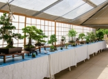 Rocky Mountain Bonsai Society exhibition