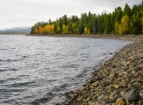Autumn aspens at Jackson Lake