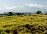 Mauna Kea above the plains