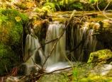 Chagoopa Creek