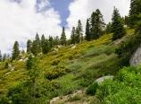Verdant slopes