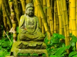 Buddha in the bamboo forest
