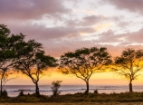 Pod trees at sunset, by the Russian Fort Elizabeth