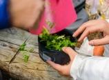 Preparing fresh cilantro
