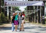 At the Lavender Festival