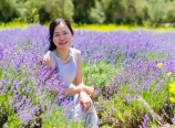 In the lavender field