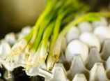 Scallions and eggs