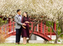 Twenty-six weeks with plum blossoms