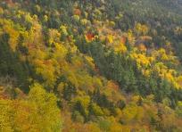 Fall Color near Silver Cascade