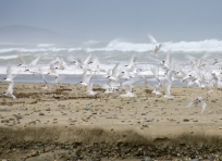 Birds at Blue Cliffs Beach