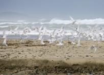 Birds at Blue Cliffs Beach