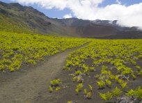 Keonehe'ehe'e Trail