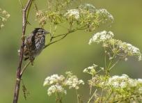 Bird at Wildcat Camp