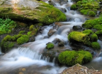 Sol Duc Tributary