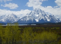 Mount Moran and Willow Flats