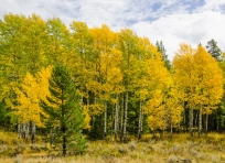 Fall color at Granite Canyon Trailhead