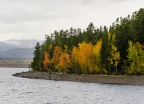 Autumn aspens at Jackson Lake