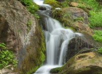 Waterfall and Watercress
